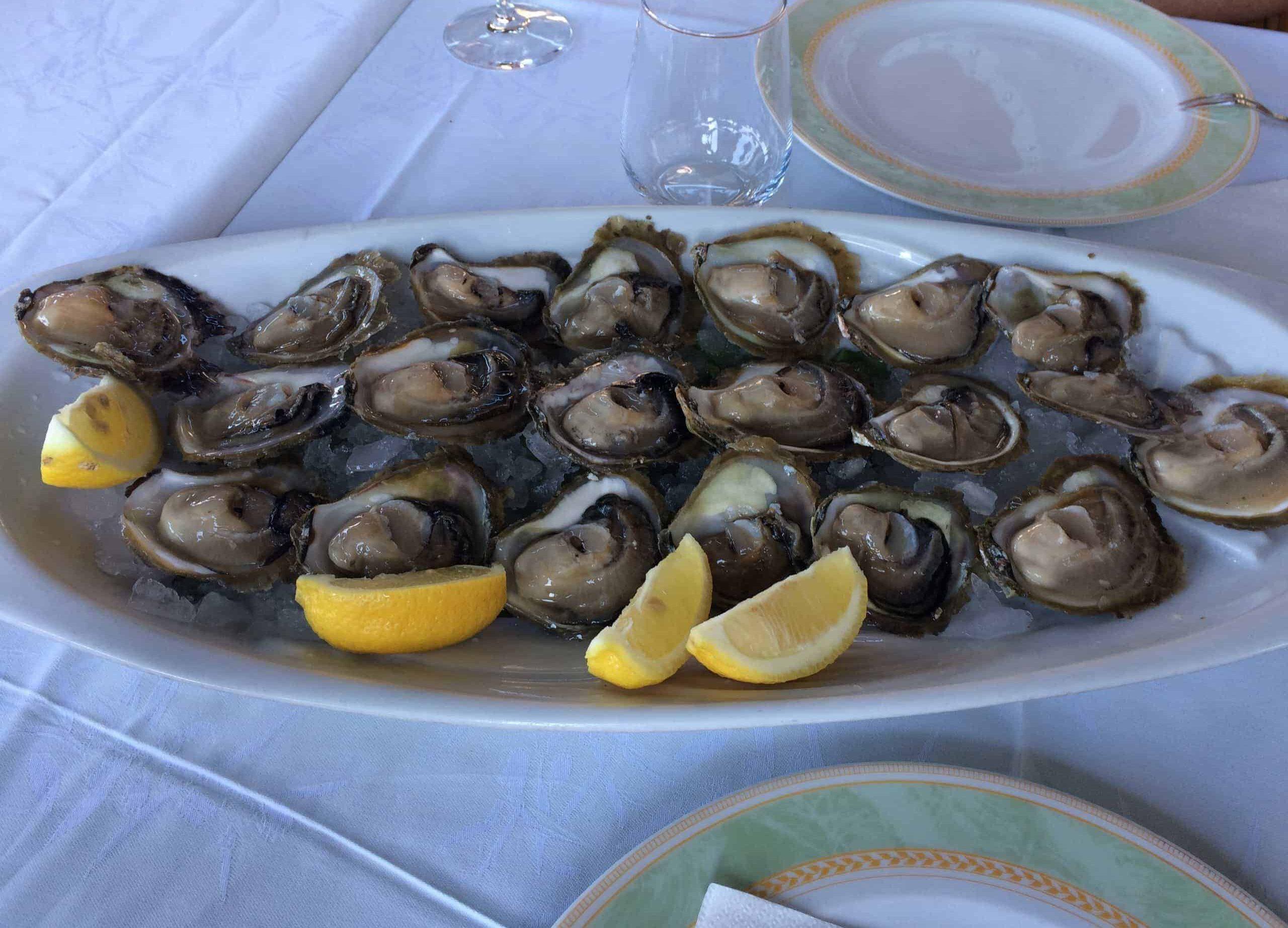 Ston - Pelješac; Vineyards & Oysters